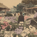 postcard-Japan