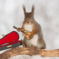 squirrels-with-tiny-music-instruments