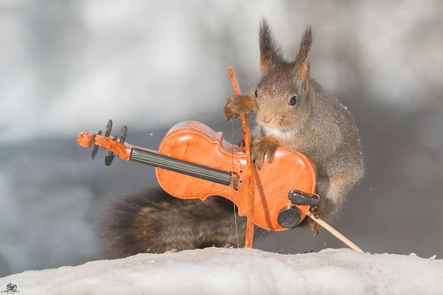 Белки с музыкальными инструментами