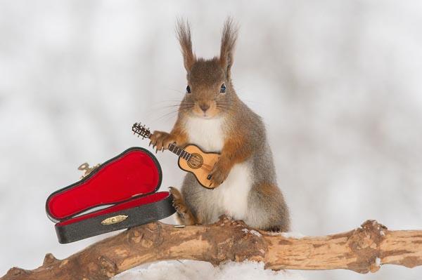 Белки с крошечными музыкальными инструментами