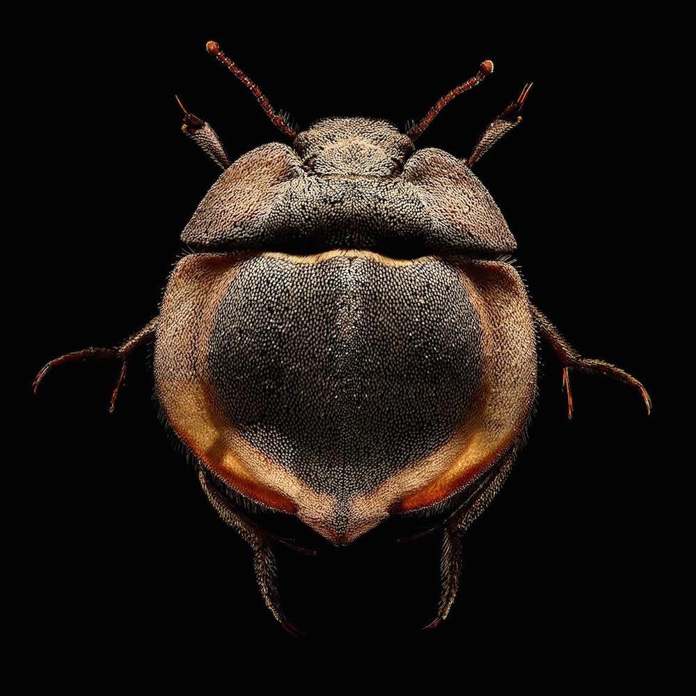 Мир насекомых в работах Левона Бисса