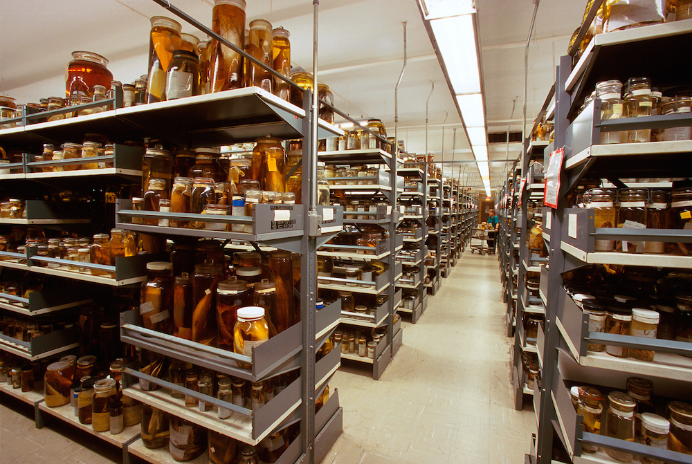 Национальный музей естественной истории (NMNH)