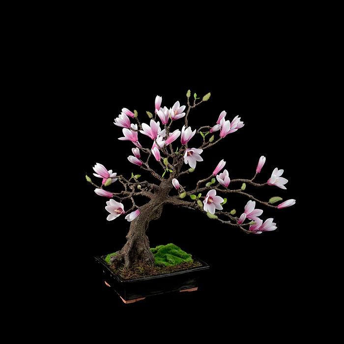Самые красивые деревья бонсай.