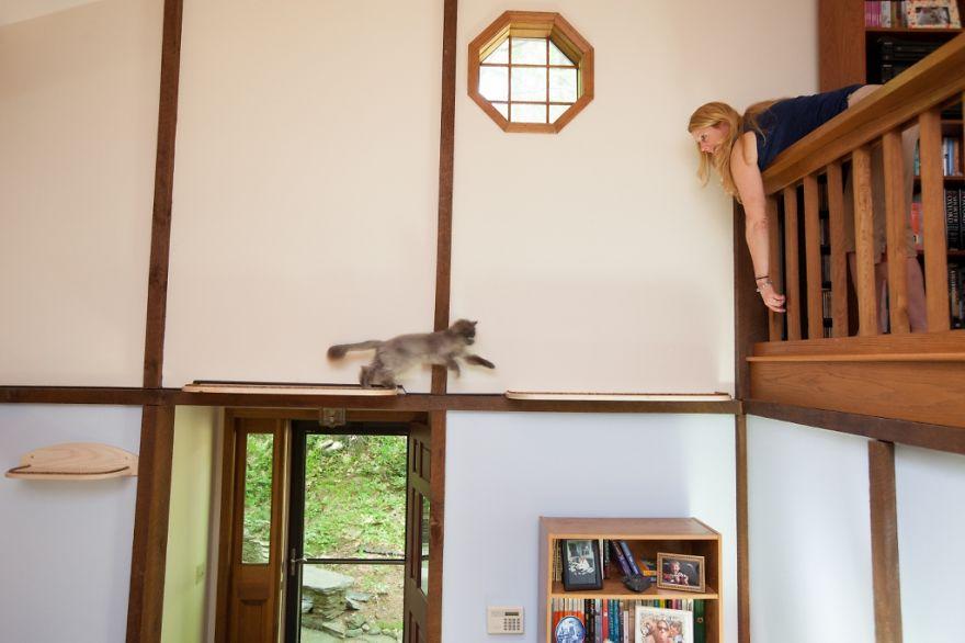 Кошачий рай в доме
