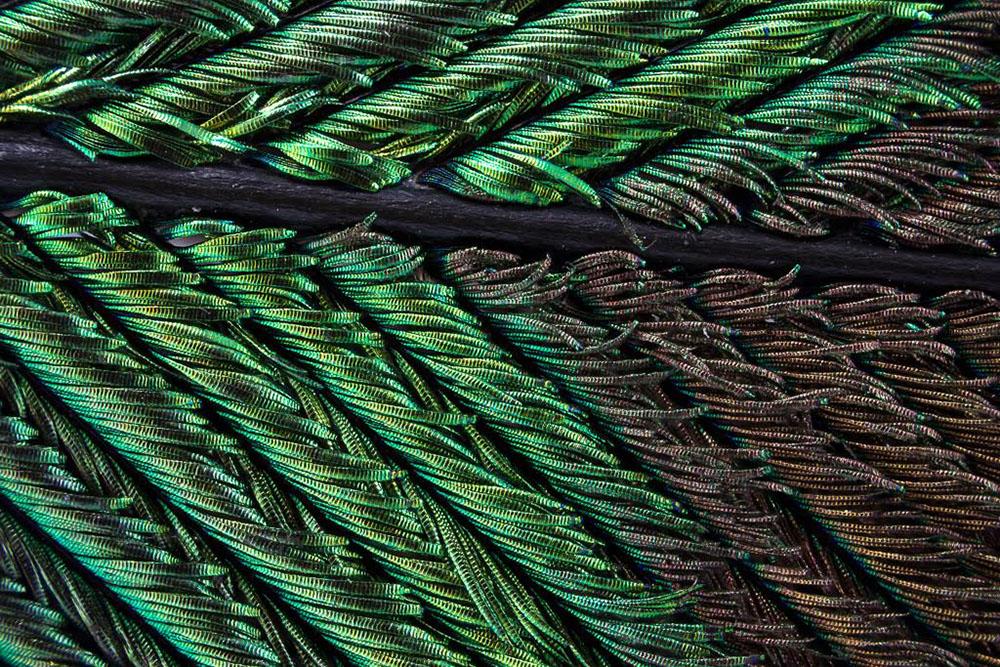 Павлиньи перья под микроскопом