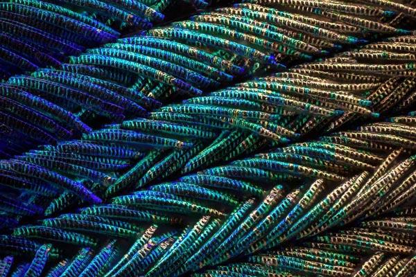 Необычайные радужные детали павлиньих перьев под микроскопом