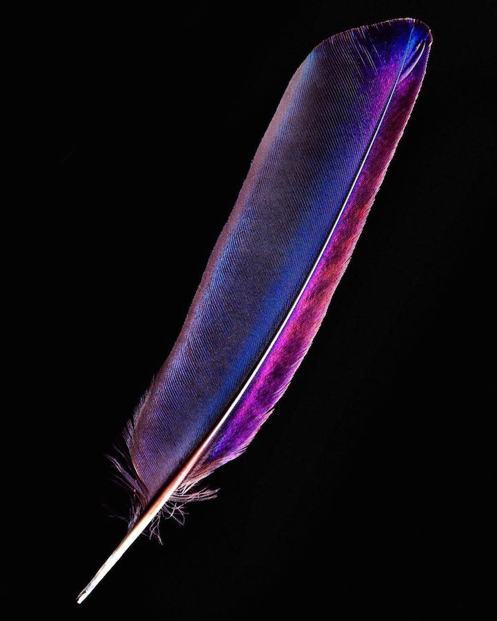 Птичьи перья в фотографиях Роберта Кларка