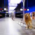 Волшебное приключение «Большого городского льва»