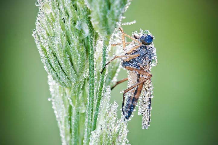 Макро-фотографии, насекомые, Дэвид Шамбон