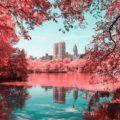 NYC-Central-Park-Paolo-Pettigiani