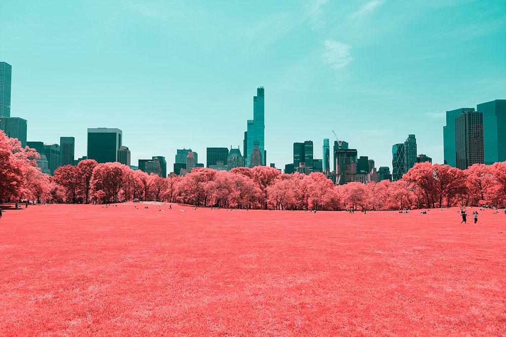 NYC-Central-Park-Paolo-Pettigiani-2