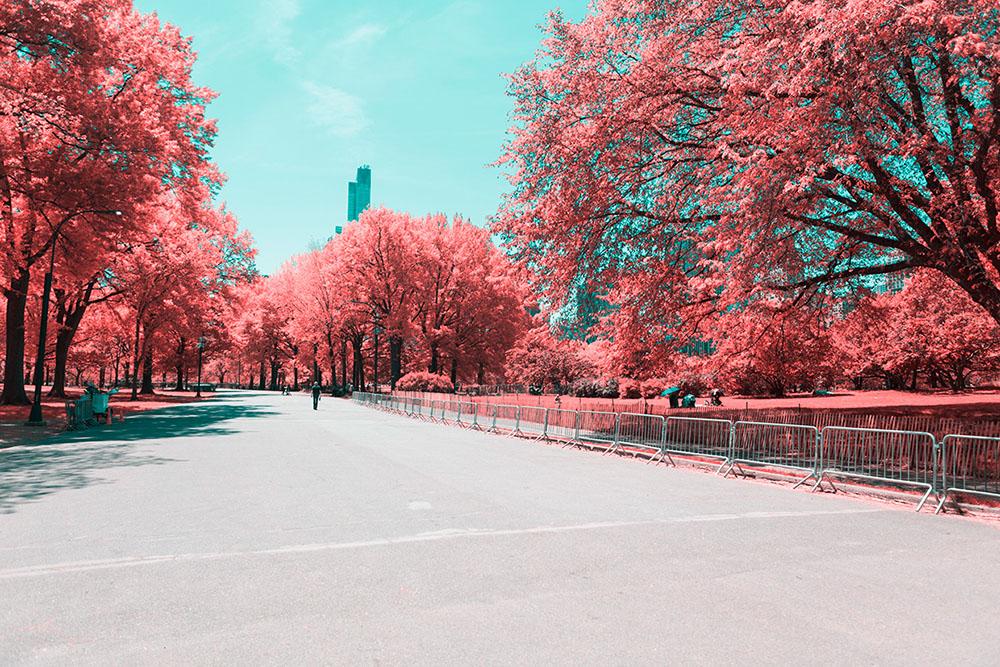 NYC-Central-Park-Paolo-Pettigiani-7