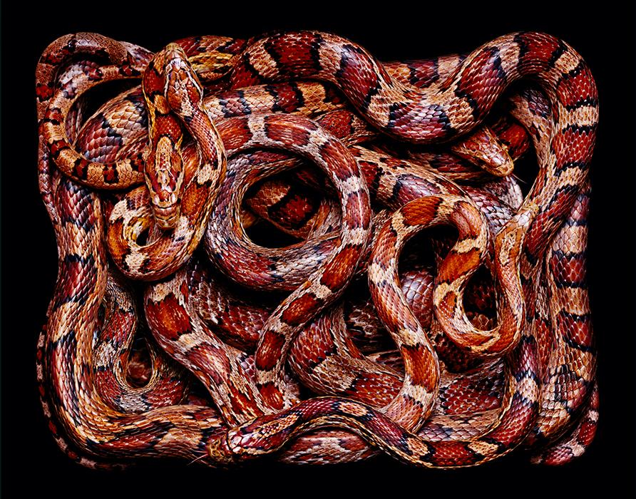 красивые фотографии змей, Гвидо Мокафико, Guido Mocafico