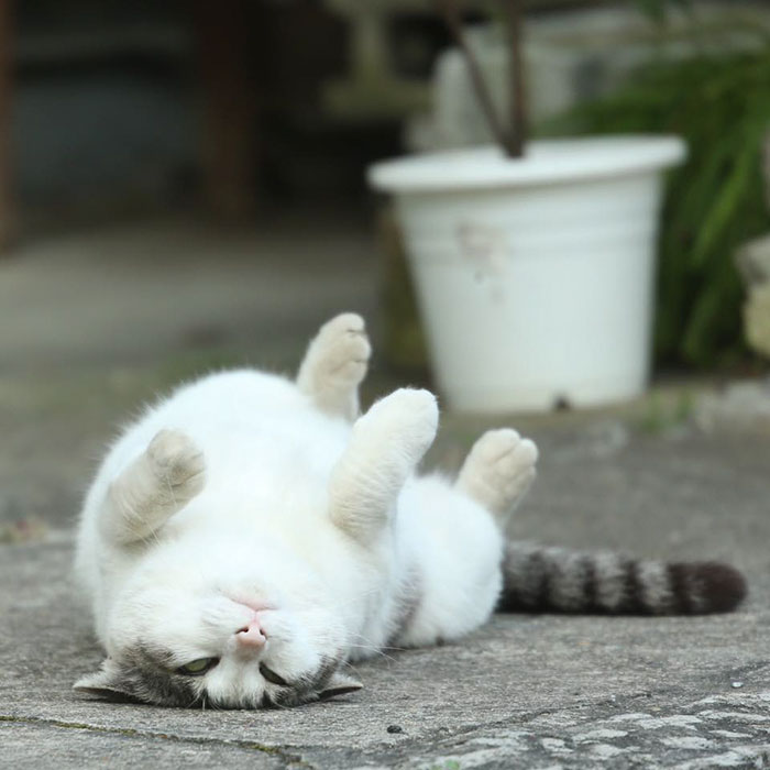 Очаровательные бродячие коты на улицах Токио.
