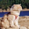 Cats-мини