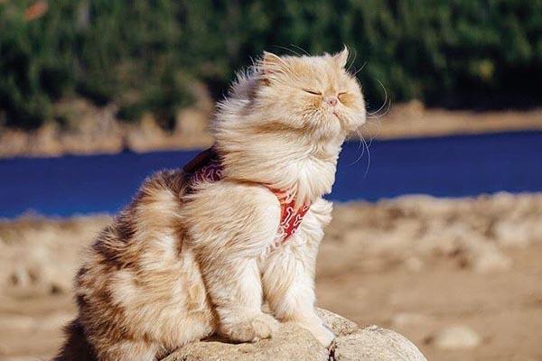 Как путешествуют коты