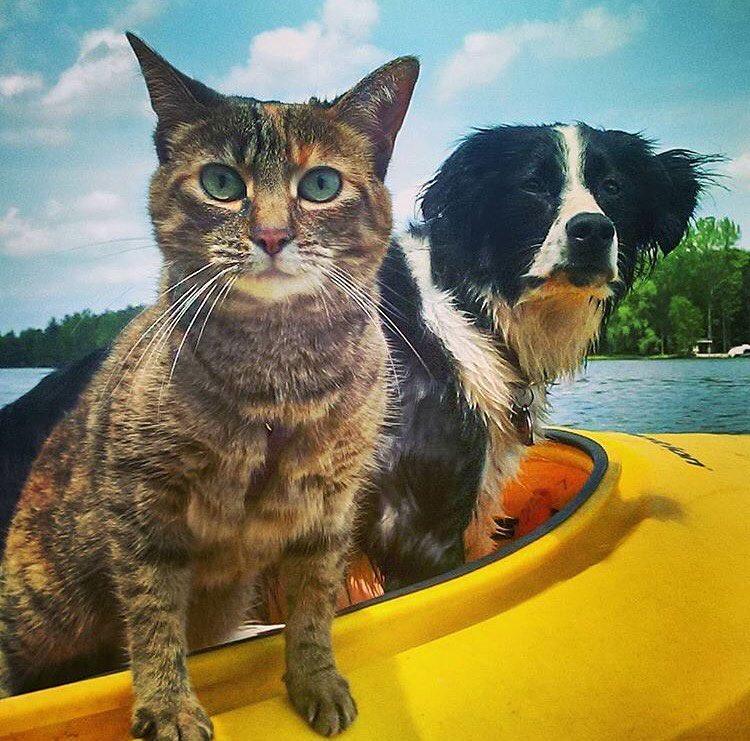 Как путешествуют коты.