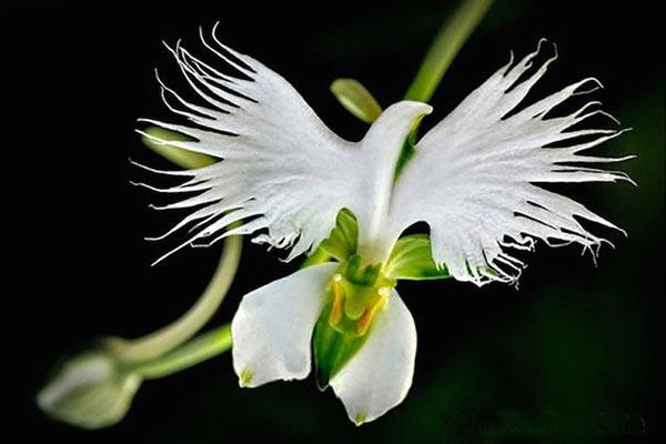 Чудесные цветы, имеющие сходства с неожиданными образами