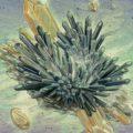 Вымышленные миры в картинах Николь Густафссон