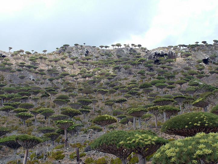 Архипелаг Сокотра