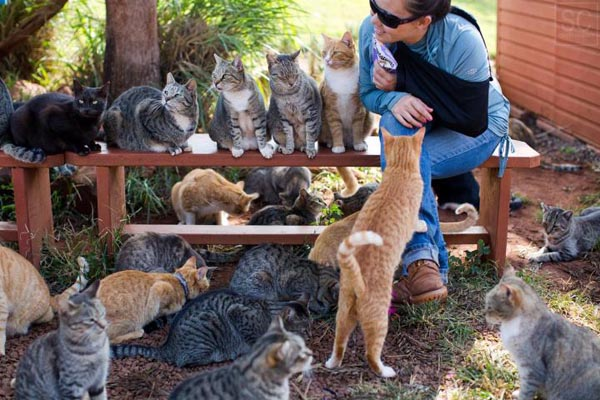 Lanai Cat Sanctuary — настоящий рай для кошек