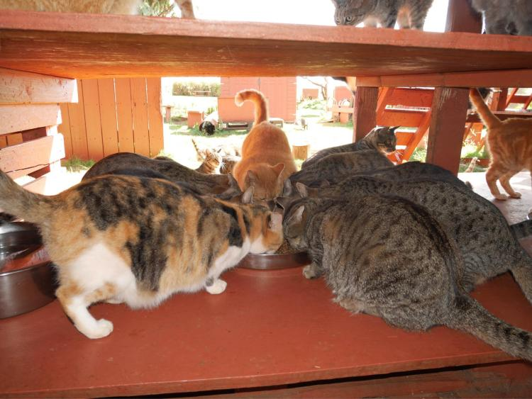 Lanai Cat Sanctuary