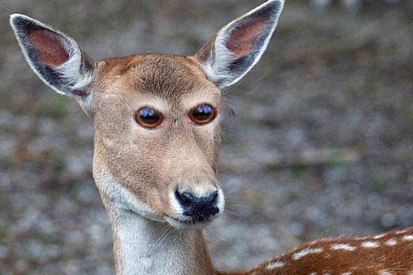 Как бы выглядели животные, если бы их глаза были расположены спереди