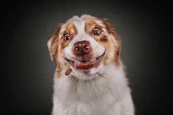 Забавные эмоции собак в фотосерии Кристиана Вилера