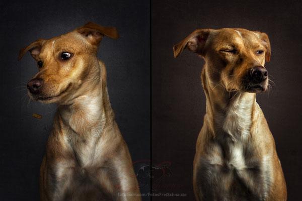 эмоции собак, Собаки ловят угощения, Dogs Catching Treats, Кристиан Вилер, Christian Vieler