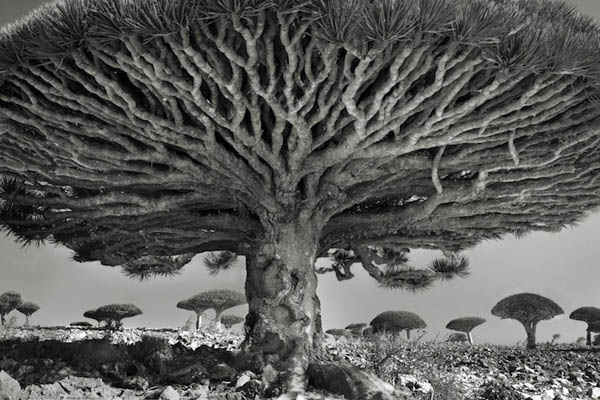 Величественные деревья в проекте Бет Мун, Beth Moon