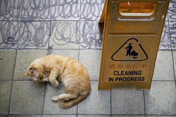 Славные коты, проживающие в магазинах Гонконга