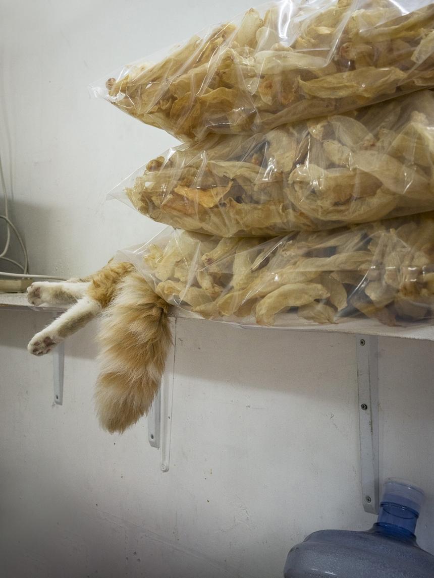 коты Гонконга, Марсель Хейджнен, Marcel Heijnen