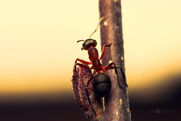 Изящные макро-фотографии от Джони Ниемела