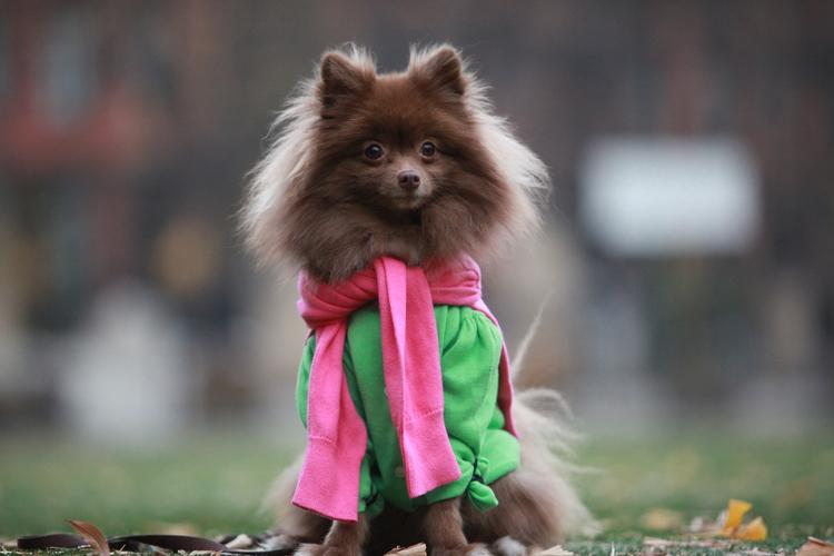 модные собаки, Шанталь Адэйр, Chantal Adair