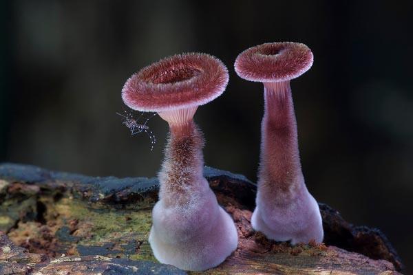Фантастическое разнообразие мира грибов в фотопроекте Стива Аксфорда