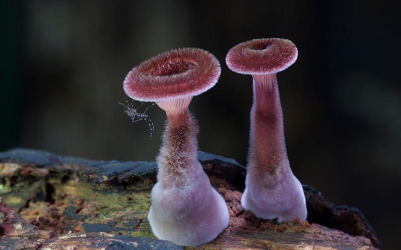 мир грибов, фотопроект, Стив Аксфорд, Steve Axford