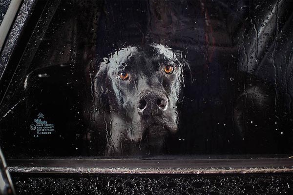 Эмоциональные портреты собак в фотосерии Мартина Асборна