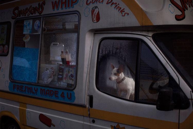 портреты собак, Мартин Асборн, Martin Usborne