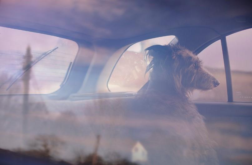 Портреты собак в фотосерии Мартина Асборна