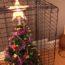 Коты, которые смогут почувствовать вкус наступающего праздника только во сне