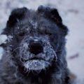 Оймякон: самый холодный населённый пункт мира в фотографиях Амоса Чаппла
