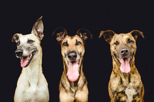 Красноречивые портреты собак от Эльке Фогельзанг