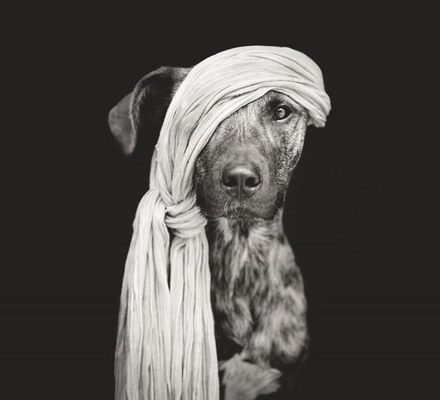 портреты собак, Эльке Фогельзанг, Elke Vogelsang