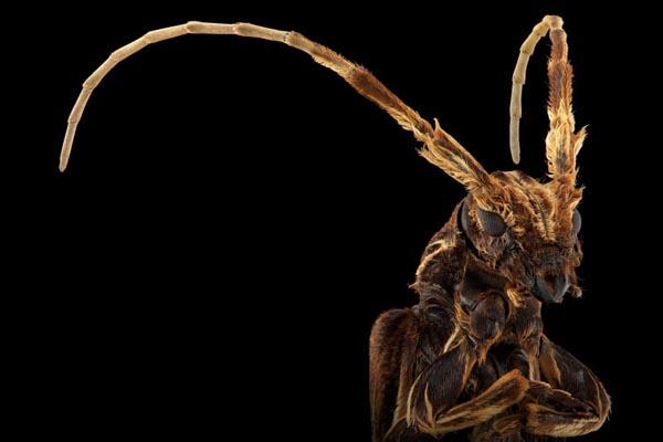 Восхитительный мир насекомых в фотографиях Паскаля Гота