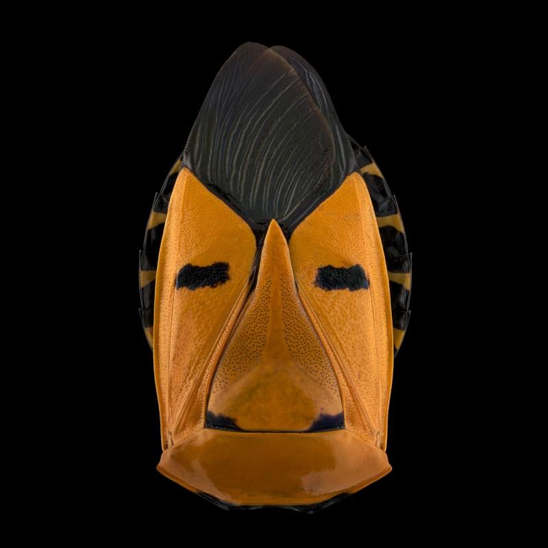 мир насекомых, фотографии, Паскаль Гот, Pascal Goet