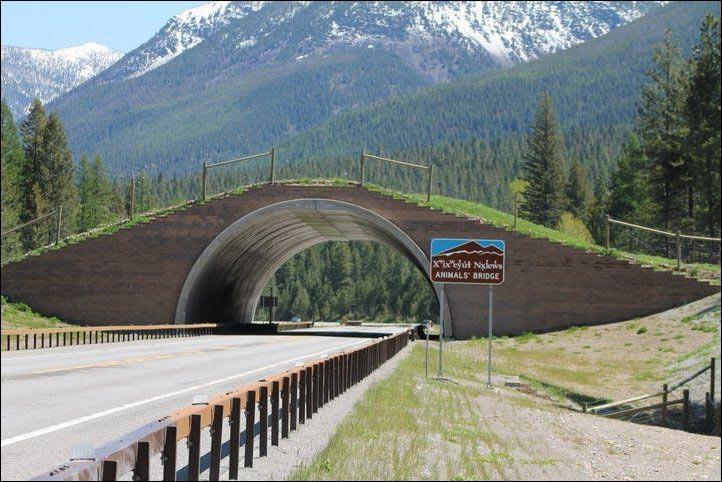 Экодуки - переходы и мосты для животных