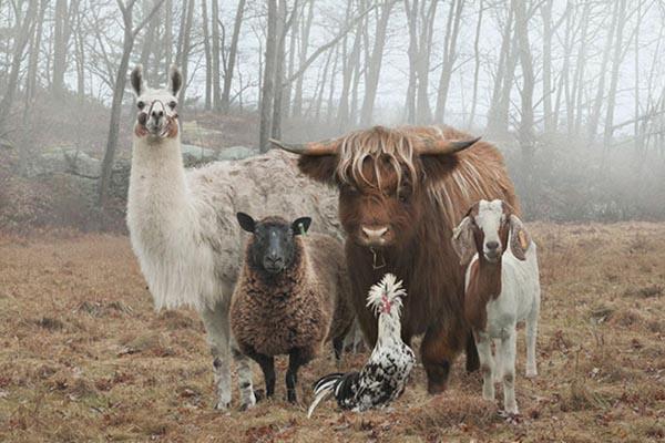 Животные, которые словно сошли с обложки альбома года