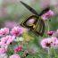 Plan Bee: инновационный продукт, способный опылять растения