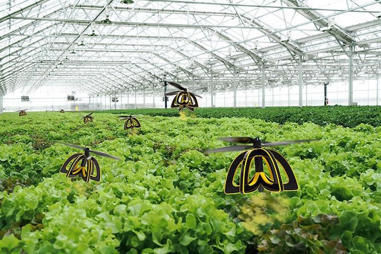 Plan Bee, искусственное опыление растений, Анна Халденванг, Anna Haldewang