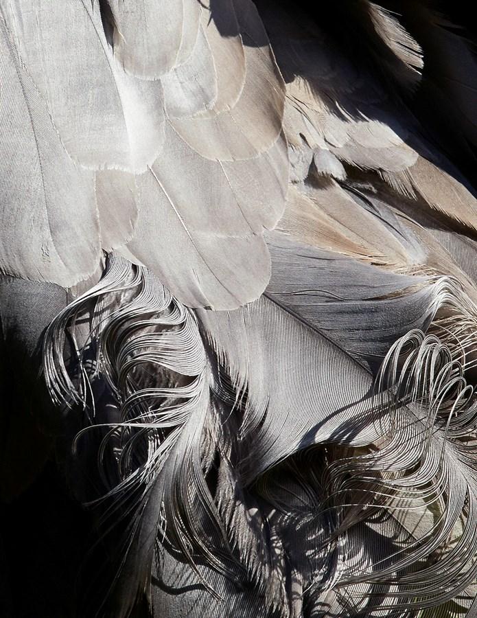 оперения птиц, перья, Томас Лор, Thomas Lohr